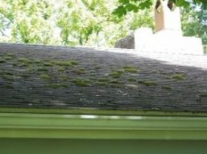 cleaning of roofs