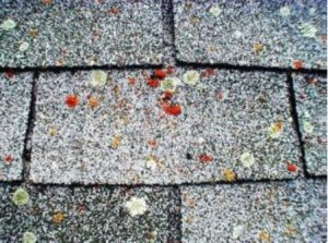 thick shingles due to moisture